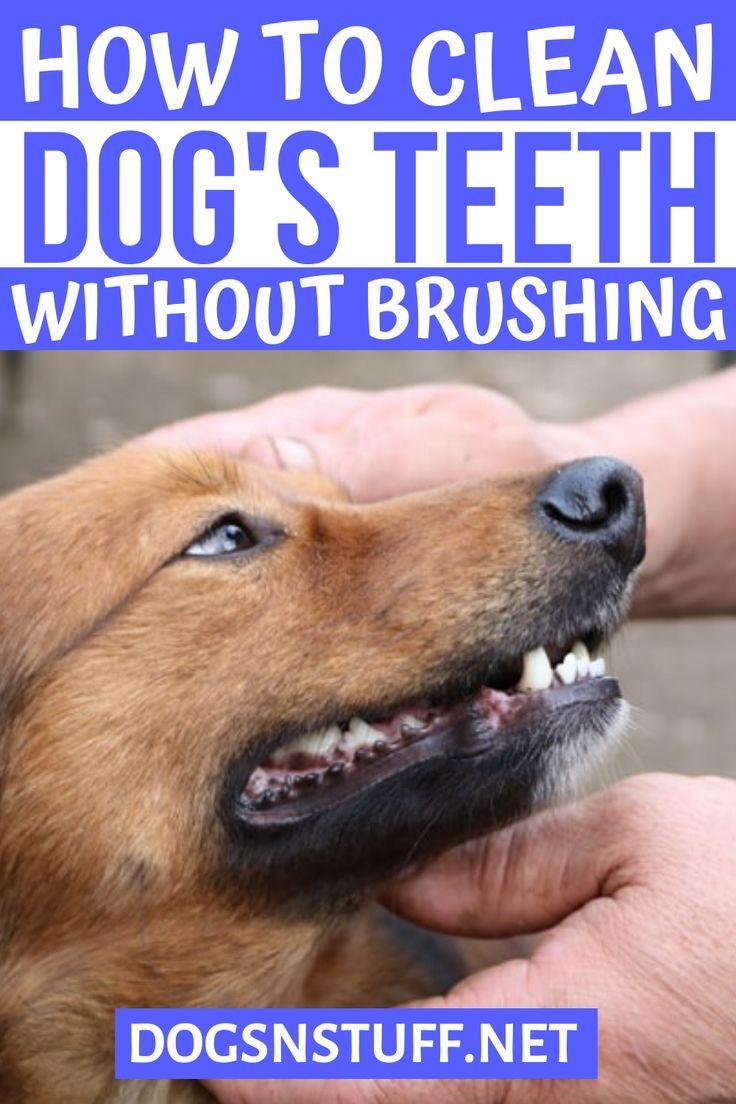 stuff to clean dogs teeth