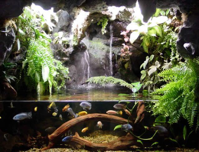 Pix For > Tree Frog Terrarium Ideas