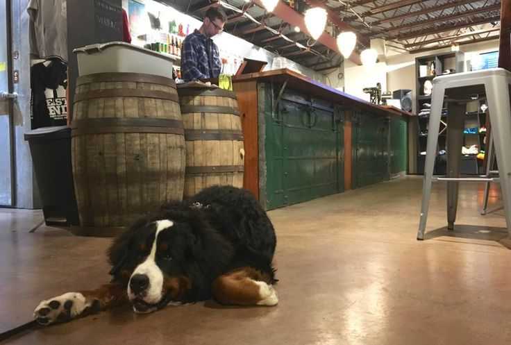 Pittsburgh bars that allow dogs can be hard to find, but these 17 spots will welcome your furry friends with open arms.