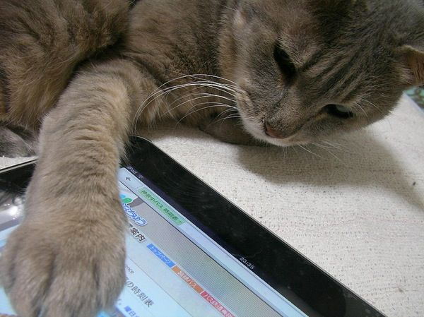 Think your new iPad is awesome? Your cat's brain leaves that iPad's memory and processing capacity in the dust! More cool facts about cat brains in today's Catster post.