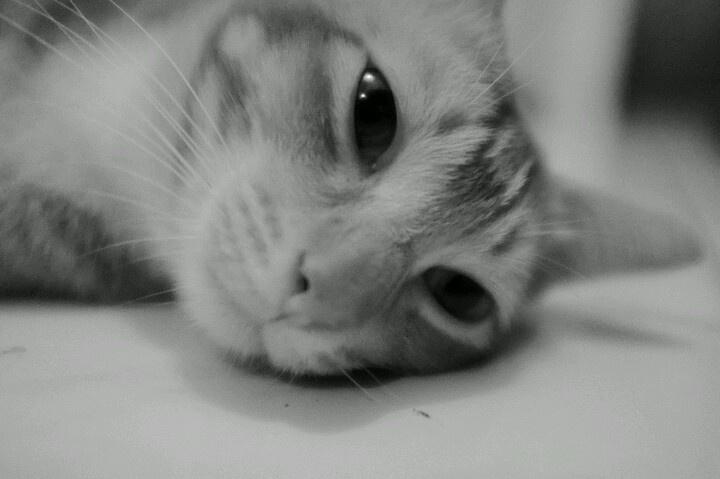 Mellow meow .
