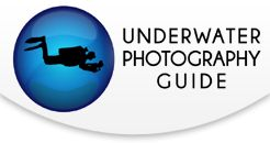 Underwater Photography Glossary        SHARE THIS STORY     Share        1:1 Magnification: A lens can achieve 1:1 magnification if it can take a photo the size