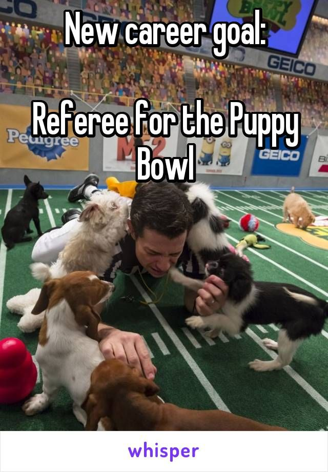 New career goal: Referee for the Puppy Bowl. I'd probably be distracted by all the cute little puppies!!!