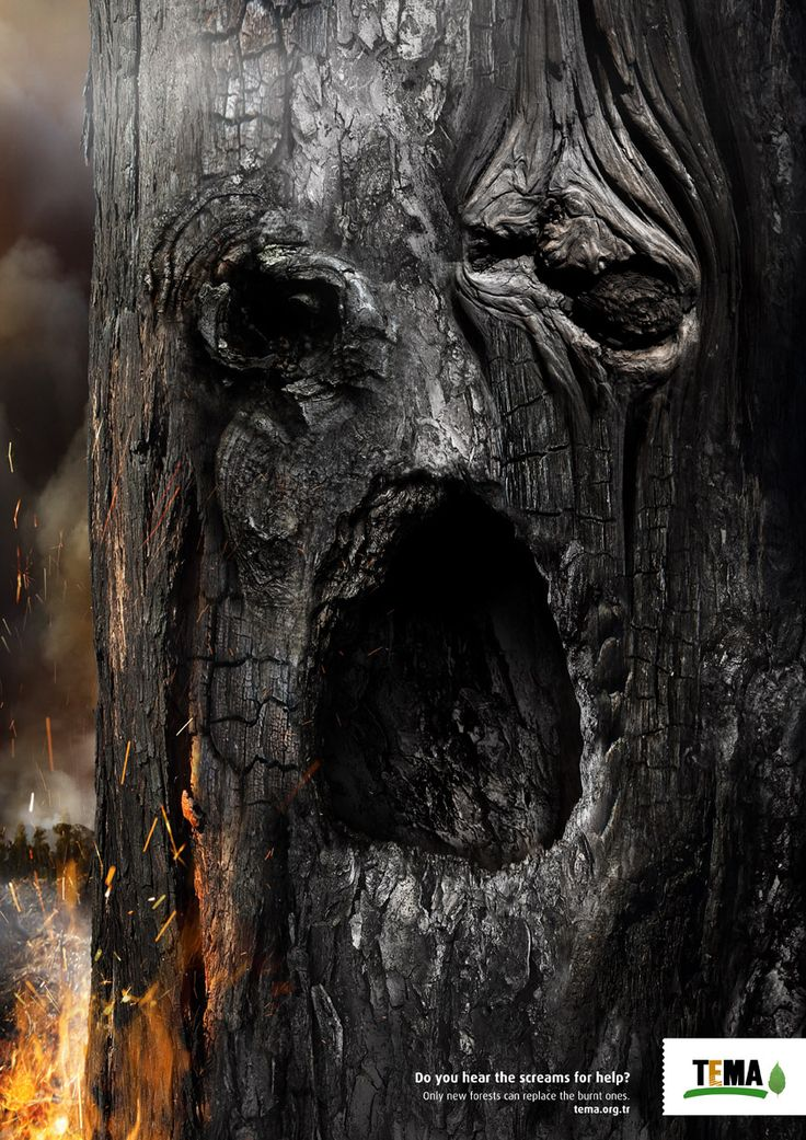 """""""Do you hear the scream for help?. Only forests can replace the burnt ones."""""""
