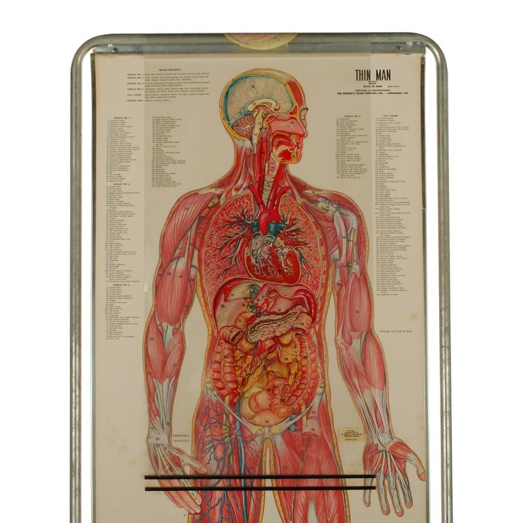 23 best Anatomy - Anatomy charts images on Pinterest | The human ...