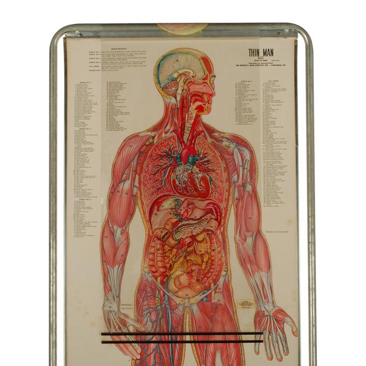 16 best Antique Medical Prints, Drawings & Models images on ...