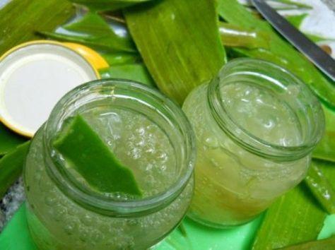 Comment faire du gel d'aloe vera maison et quelles sont ses applications ? Avant de préparer cette crème, il est important de faire tremper les tiges d'aloe vera dans de l'eau pour qu'elles expulsent l'aloïne, une substance qui peut être toxique.