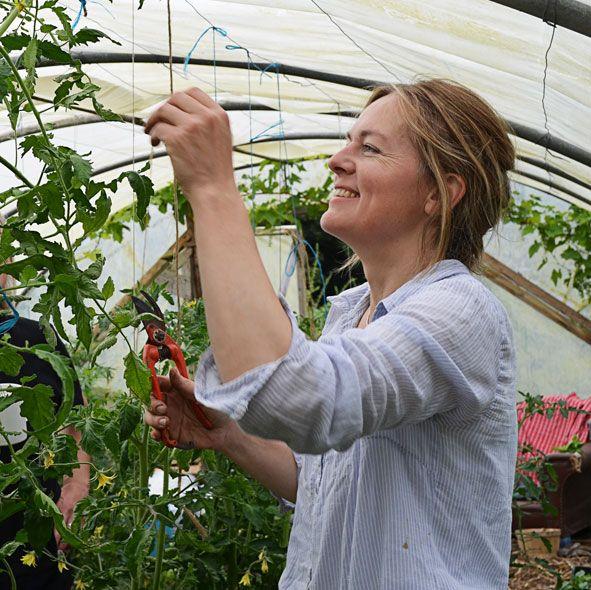 47 erreurs à ne pas faire dans la culture des tomates.