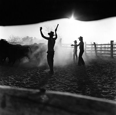 "Max Dupain - Stockyards, North Queensland - 1980  ""Modern photography must do more than entertain, it must incite thought and by its clear statements of actuality, cultivate a sympathetic understanding of men and women and the life they live and create."" – Max Dupain   http://www.maxdupain.com.au/"