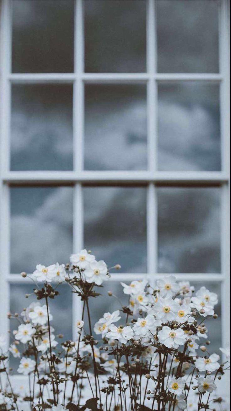 Dainty rustic chic window mutton bars grids windowpane flowers