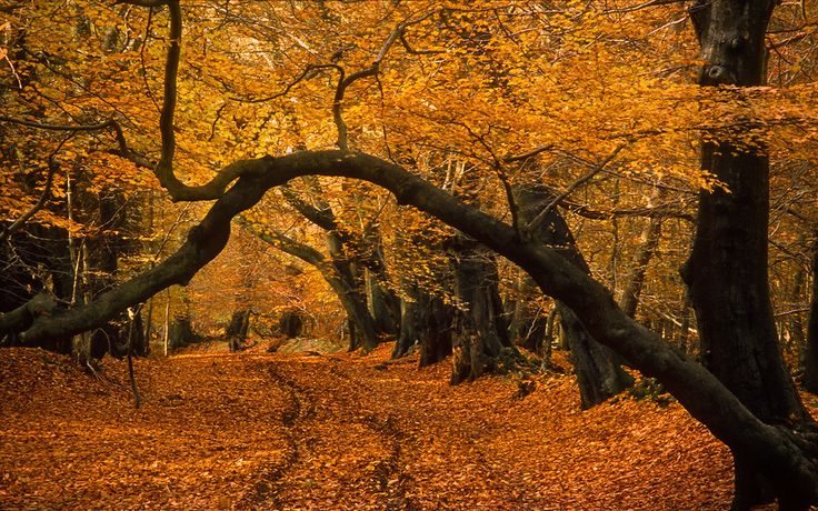 I mean, obviously. | 31 Reasons To Go Visit A Beech Tree Forest Right Now  Ashridge Forest, Hertfordshire, England.