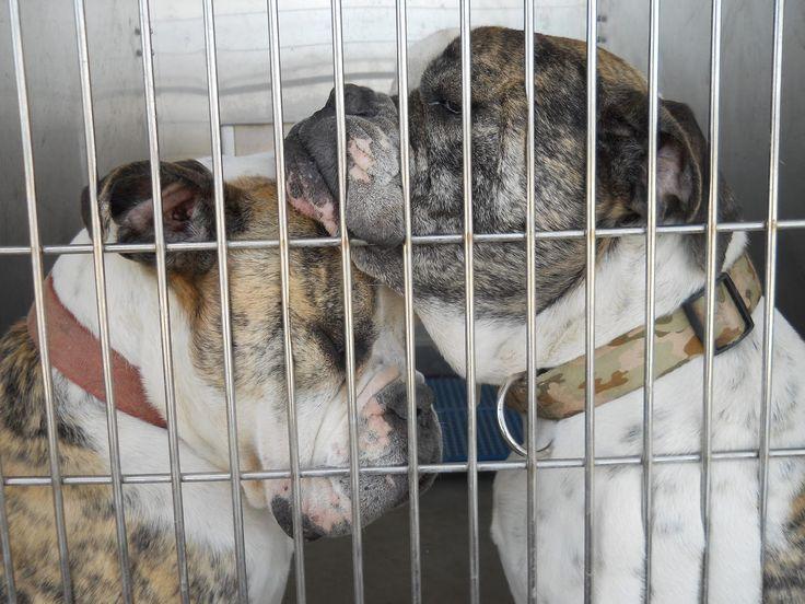 The Pet Studio: Villalobos Rescue Center Fundraiser!