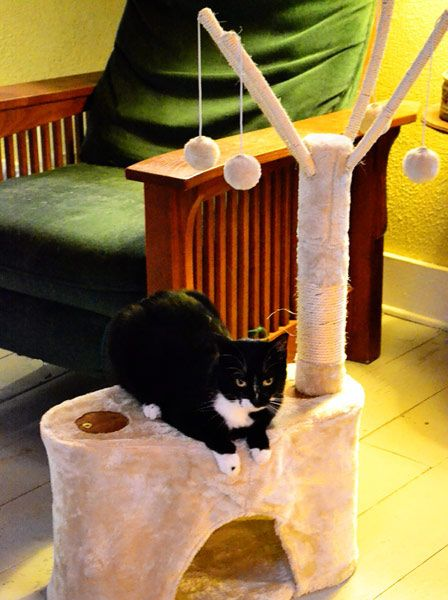 "We recently picked up a Majestic Pet  Kitty Casita cat tree for $19.99  at #TuesdayMorning (compare at $39.99), complete with a sisal scratching post and our 18-month-old kitten Lucky has declared it a most #TreasuredGift! The ""cat cave"" at the base gives him a fun place to hide, too!"