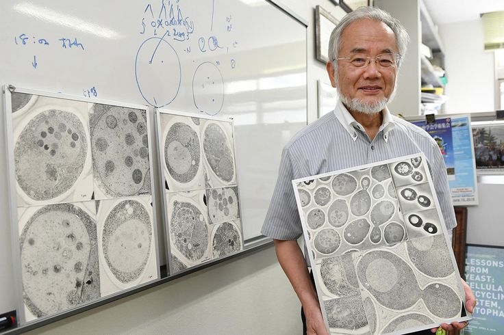 Yoshinori Ohsumi has won 2016's Nobel Prize in Physiology or Medicinefor his 'discoveries of mechanisms for autophagy' - or how our cells recyle their contents