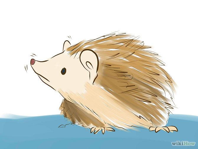 How to Take Care of a Hedgehog: 10 Steps (with Pictures)