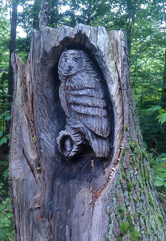 213 Best Logs God S Art Images On Pinterest Tree