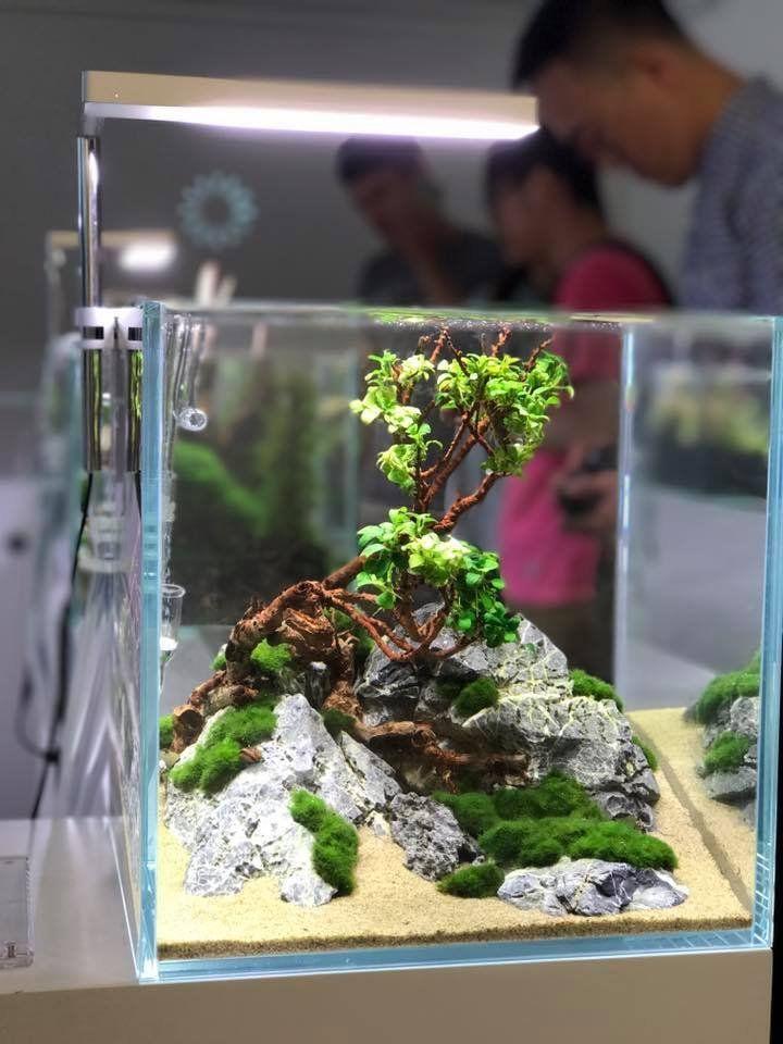 Simple And To The Point Yet Elegant Akuarium Taman Aquarium