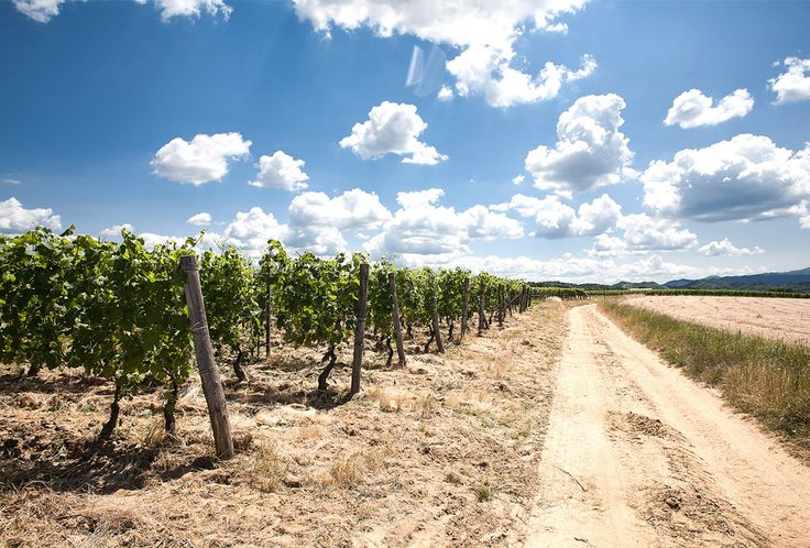 Vineyards and blue sky in Gavi