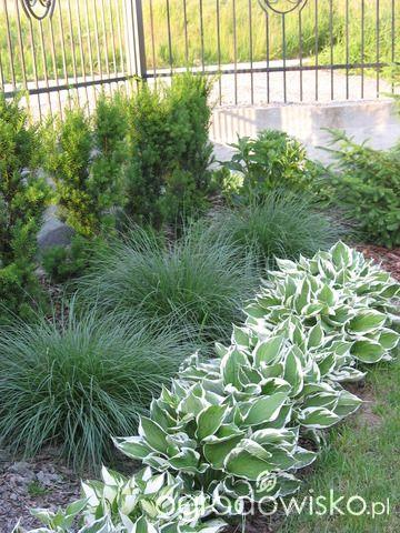 Ogród wśród pól i wiatrów - strona 130 - Forum ogrodnicze - Ogrodowisko