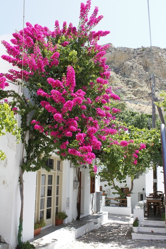 Dreaming about Skyros, Greece.......
