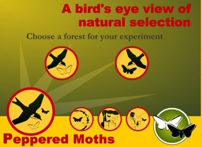 Great website using natural selection to generate and test hypotheses. #edtech