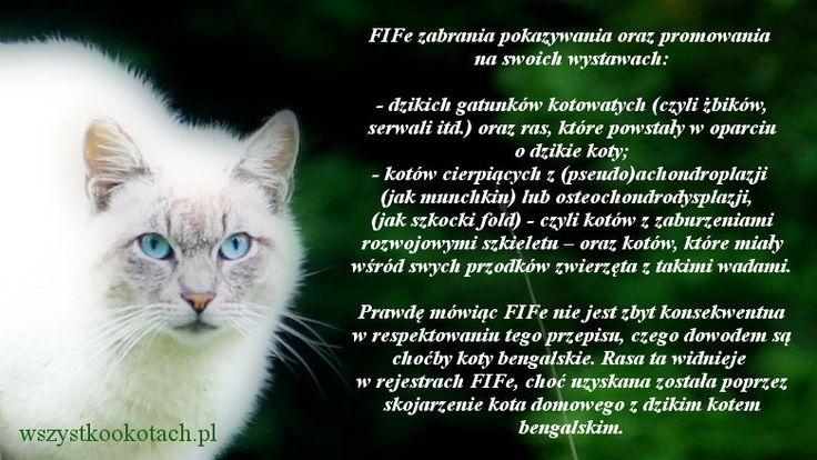 Koty, których nie można prezentować na wystawach FIFe