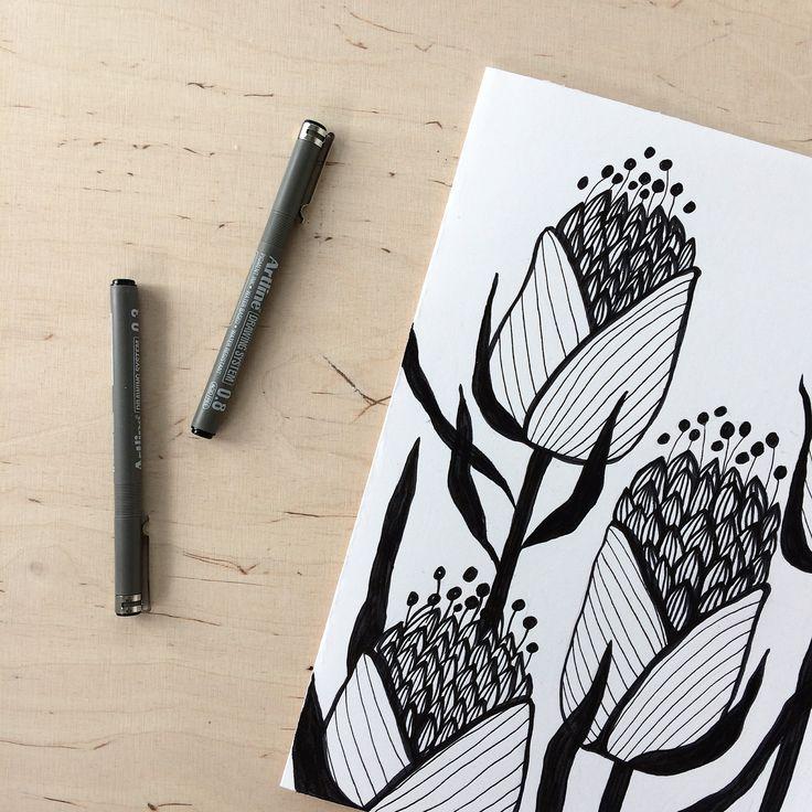 Floral drawing. Botanical sketches. Ink. Illustration. By Johanna Sandberg.