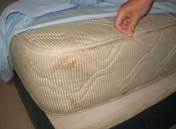 1000 Ideas About Bed Bugs Treatment On Pinterest Bed