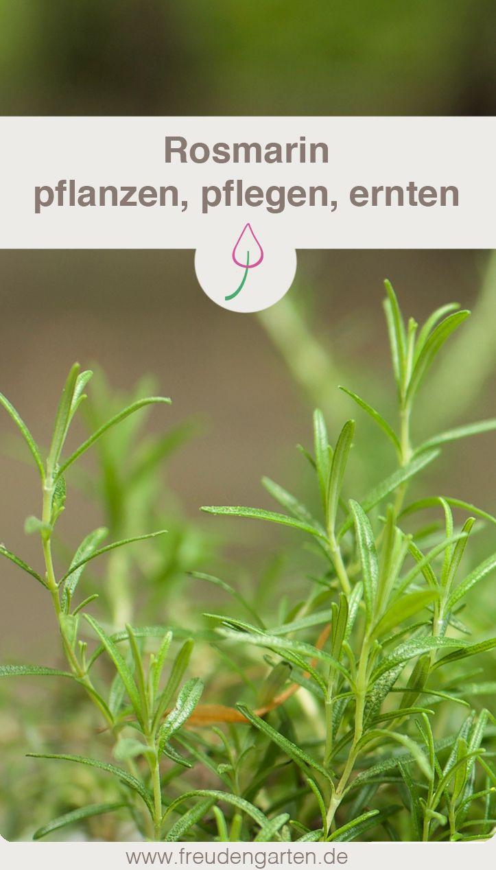 Rosmarin Pflegen Garten Gardening Tips Garden Und Vegetable Garden