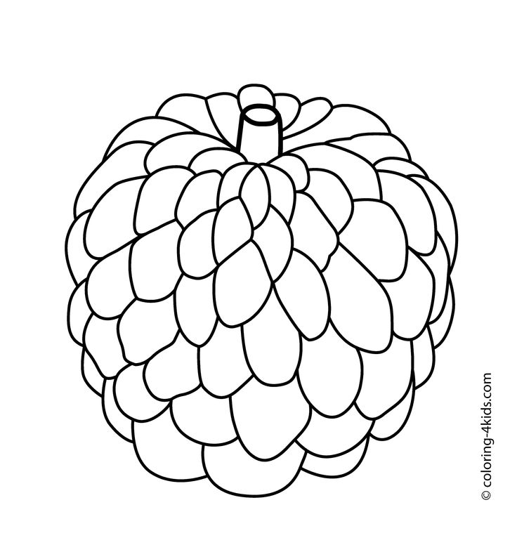 Custard Apple Coloring Pages : Custard apple fruits coloring pages for kids printable