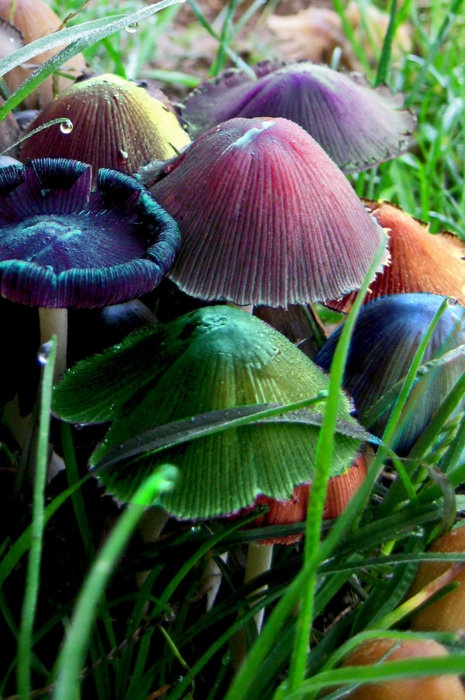 a rainbow of toadstools  Cindi Hinshaw via Kaye Lyons onto #65) Outdoors..Enchanted Forrest...Remember Once Upon A Time, when we were kids?..We could play for hours, just pretending....