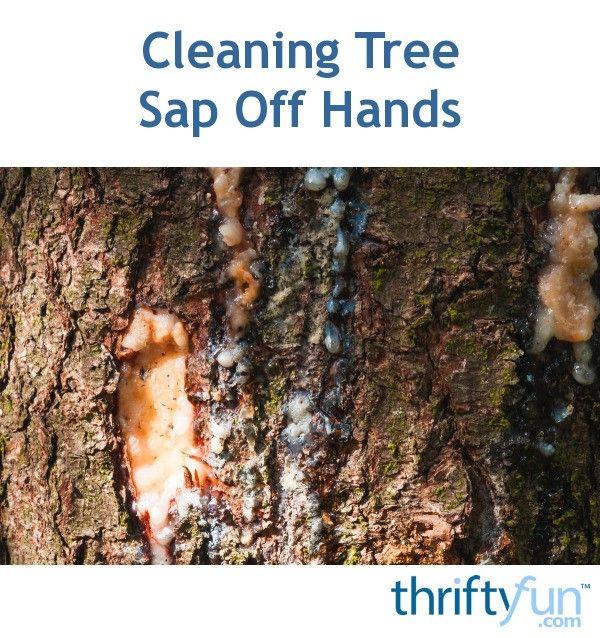 Cleaning Tree Sap Off Hands Tree Sap Plant Sap Sap