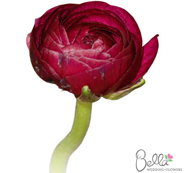Wedding Flowers Names: 1000+ Images About Burgundy Wedding Flowers On Pinterest