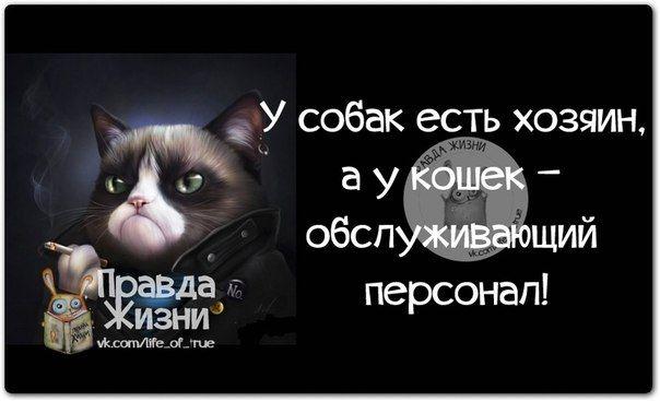 Позитивные фразочки в картинках №7814 » RadioNetPlus.ru развлекательный портал