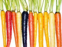Resultado de imagen para zanahoria en su siembra