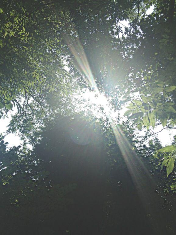sunshine threw trees.