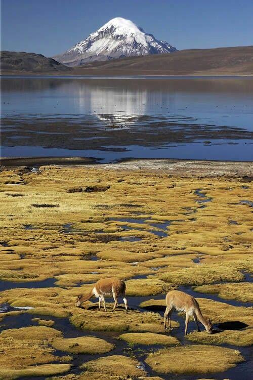 Lago Chungara Norte de Arica, Chile.