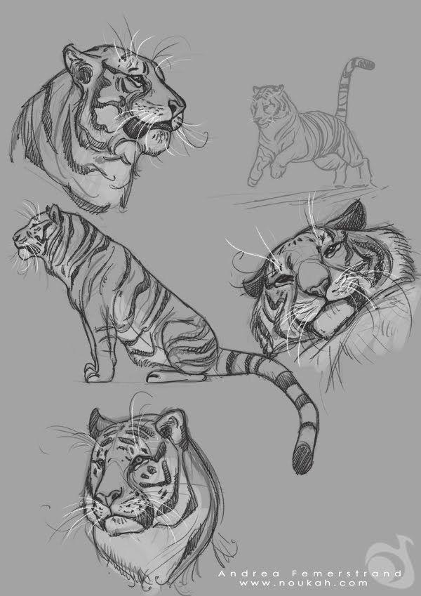 Poses de tigres
