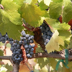 Natural Wine Can Learn from Natural Food.