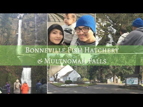 Bonneville Fish Hatchery & Multnomah Falls – AyR Galaxy
