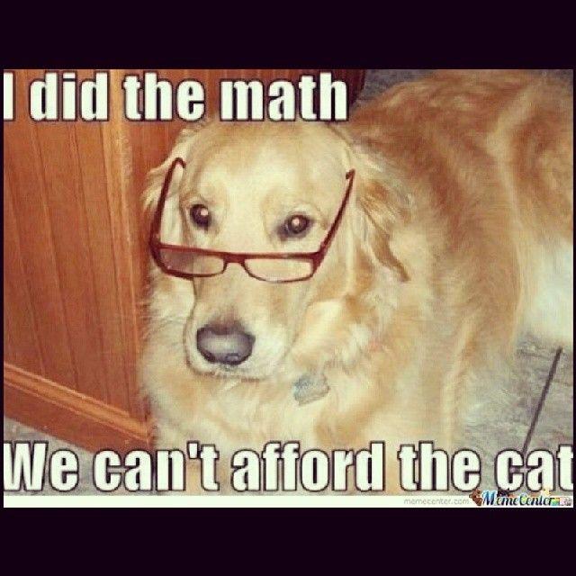 37 best images about dog jokes on Pinterest | Animal ...