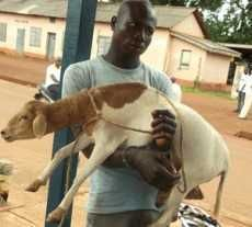 Court Orders Police To Send Lost Sheep To Osu Children Home - Peace FM Online