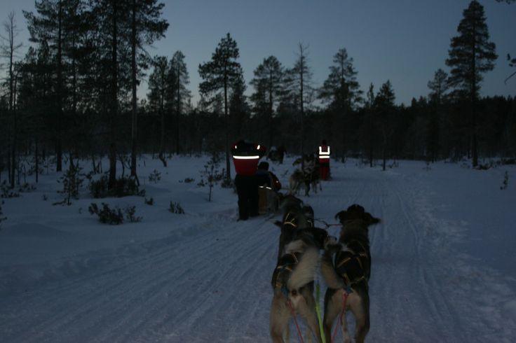 Husky dog sledging, sledding, Saariselka, Lapland, Santa's Lapland, Father Christmas, Santa Claus, Finland, Christmas, snow, http://globalmousetravels.com/2013/12/trip-review-lapland-santas-lapland/