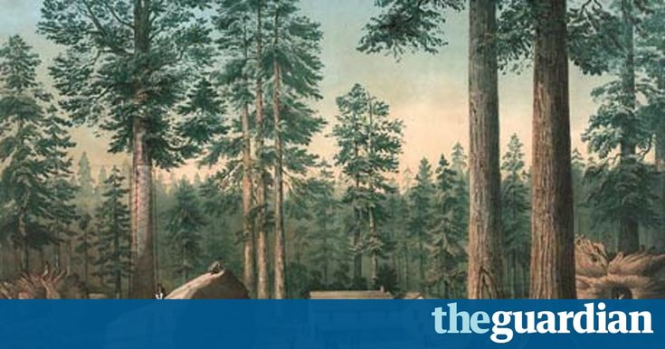 Leo Hickman: 160 years ago a giant sequoia in California was cut down, becoming the inspiration for the national park system