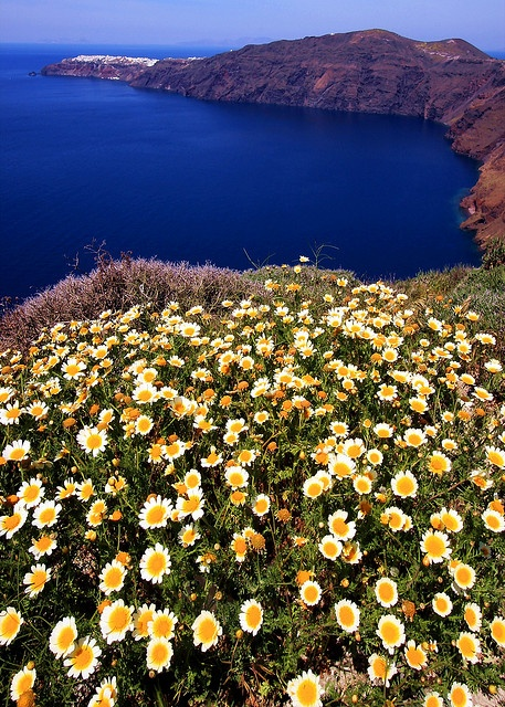 Seascape with daisies, Santorini, Greece