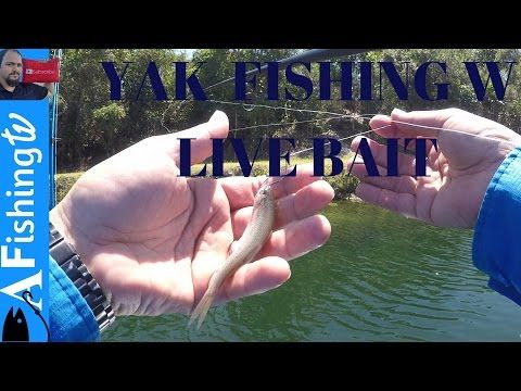Kayak Bass Fishing with live bait it is hard and I lost a ROD - (More info on: https://1-W-W.COM/fishing/kayak-bass-fishing-with-live-bait-it-is-hard-and-i-lost-a-rod/)