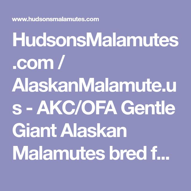 HudsonsMalamutes.com / AlaskanMalamute.us - AKC/OFA Gentle Giant Alaskan Malamutes bred for temperament, quality and size - FAQ - Frequently Asked Questions