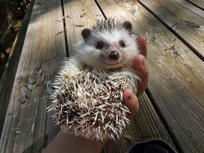 Best Hedgehogs Images On Pinterest Baby Animals Baby - 29 adorable animals that will put a smile on your face