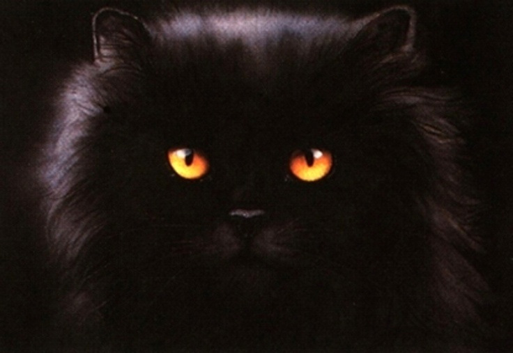 Wandbild »Black Persian Cat« Online Shop - Kaufen beim Ackermann Versand