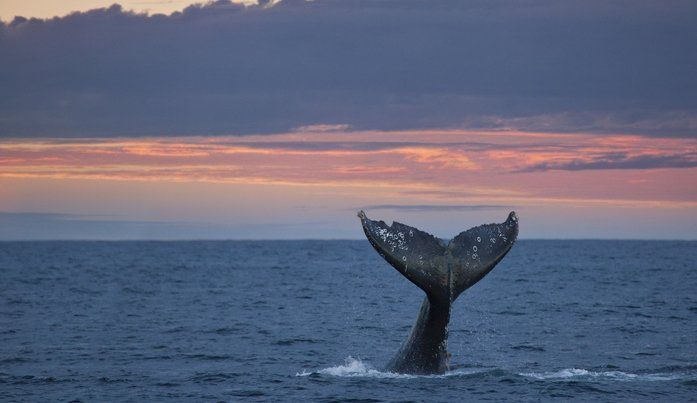 See Thousands Of Whales During Their Winter Migration On The Oregon Coast During Whale Watching Week Whale Watching Oregon Coast Gray Whale